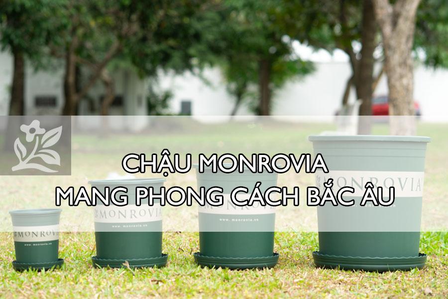 Chau-Monrovia-mang-phong-cach-Bac-Au