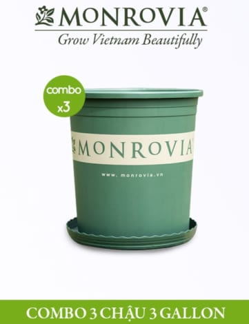 COMBO 3 chậu - Chậu nhựa Monrovia 3 Gallon