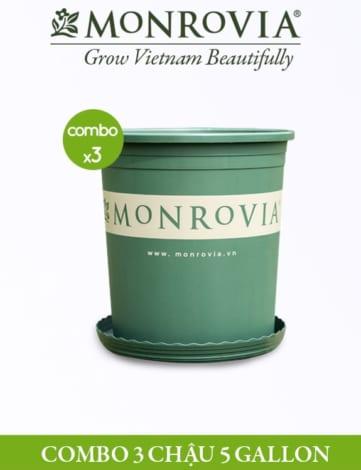 COMBO 3 chậu - Chậu nhựa Monrovia 5 Gallon