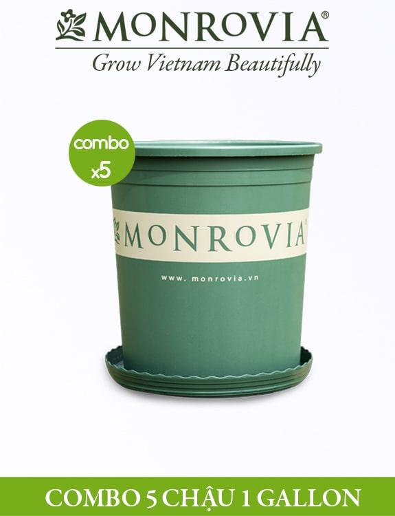 COMBO 5 chậu - Chậu nhựa Monrovia 1 Gallon