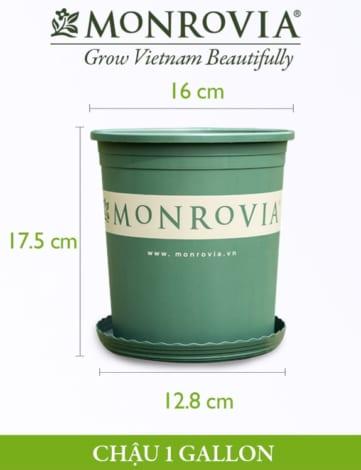 Chậu nhựa trồng cây Monrovia 1gl, chậu trồng cây, chậu cây cảnh mini, để bàn, treo ban công, treo tường, cao cấp