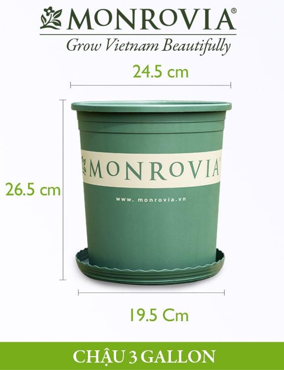 Chậu nhựa trồng cây Monrovia 3gl, chậu trồng cây, chậu cây cảnh mini, để bàn, treo ban công, treo tường, cao cấp