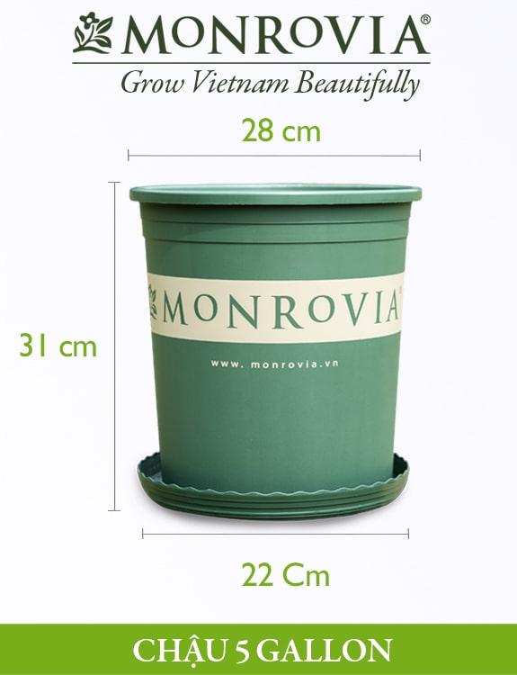 Chậu nhựa trồng cây Monrovia 5gl, chậu trồng cây, chậu cây cảnh mini, để bàn, treo ban công, treo tường, cao cấp