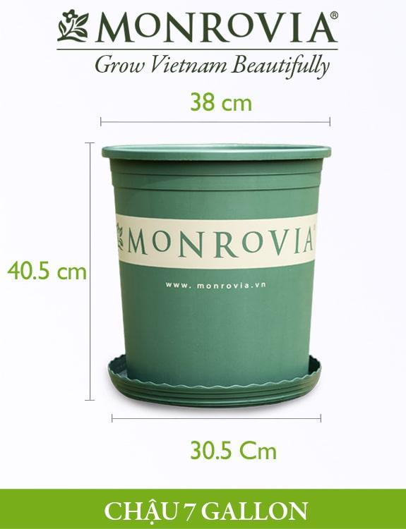 Chậu nhựa trồng cây Monrovia 7gl, chậu trồng cây, chậu cây cảnh mini, để bàn, treo ban công, treo tường, cao cấp