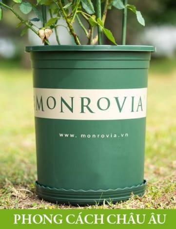 Chậu nhựa trồng cây Monrovia, chậu trồng cây, chậu cây cảnh mini, để bàn, treo ban công, treo tường, cao cấp, phong cách châu âu