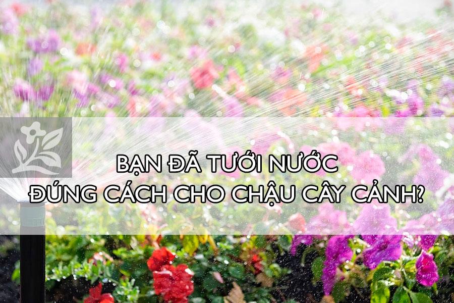 Ban-da-tuoi-nuoc-dung-cach-cho-chau-cay-canh