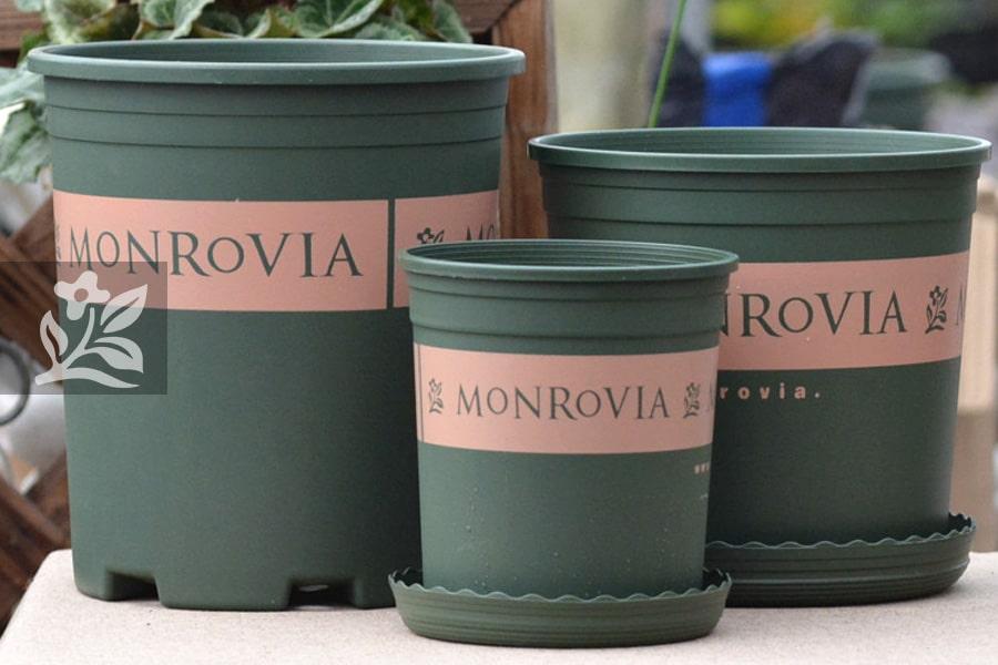 Chậu Monrovia khắc phục được nhược điểm của chậu nhựa