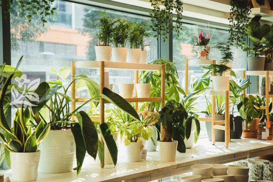 Chọn chậu cây phù hợp với kích thước tạo sự hài hòa cho không gian