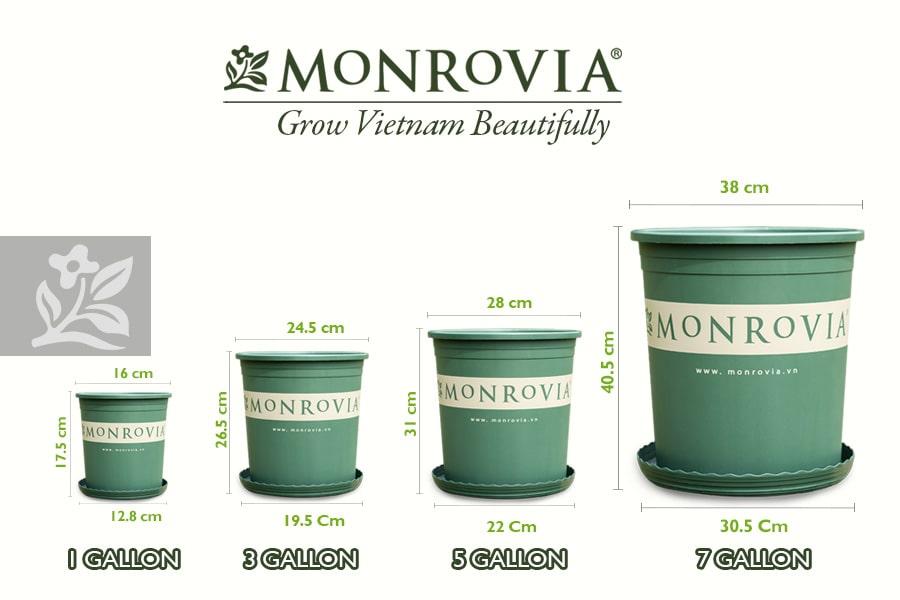 4 kích cỡ chậu nhựa trồng cây Monrovia
