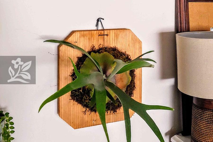 Chậu cây gắn tường tiết kiệm tối đa không gian