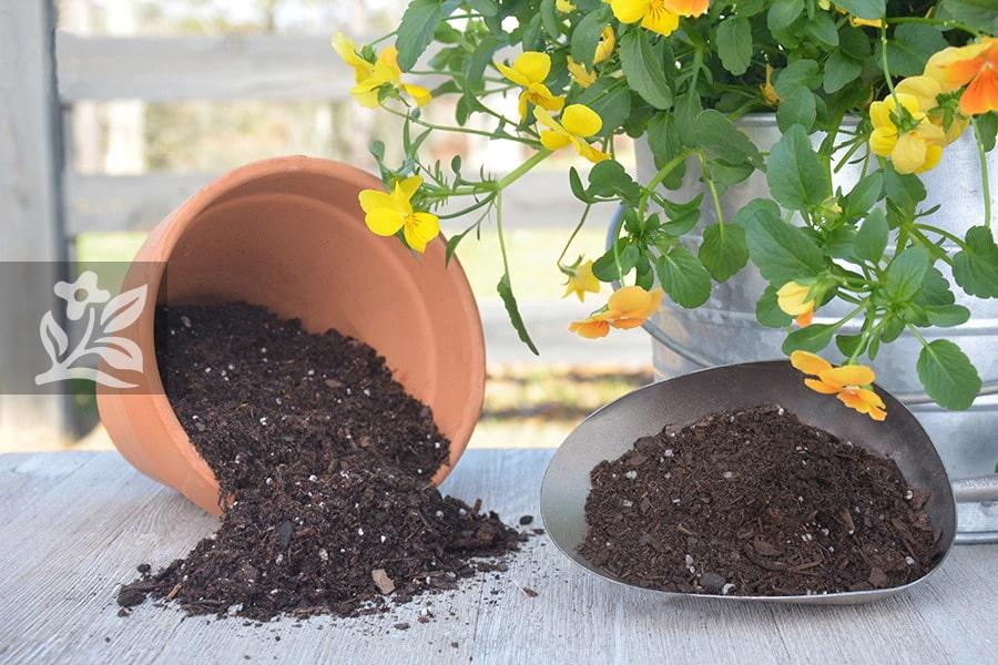 Sử dụng đất trồng tơi xốp không bị giữ nước