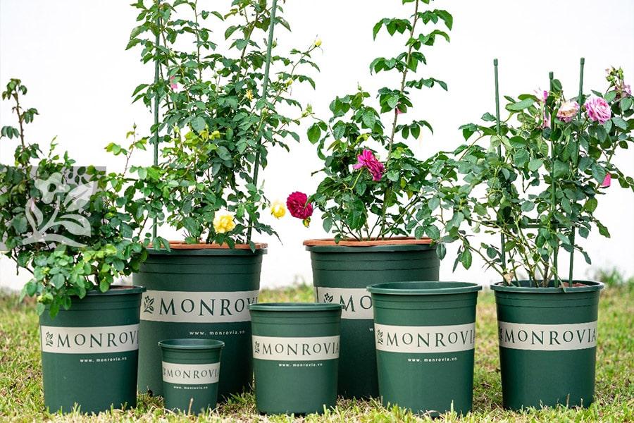Chậu nhựa trồng cây 2