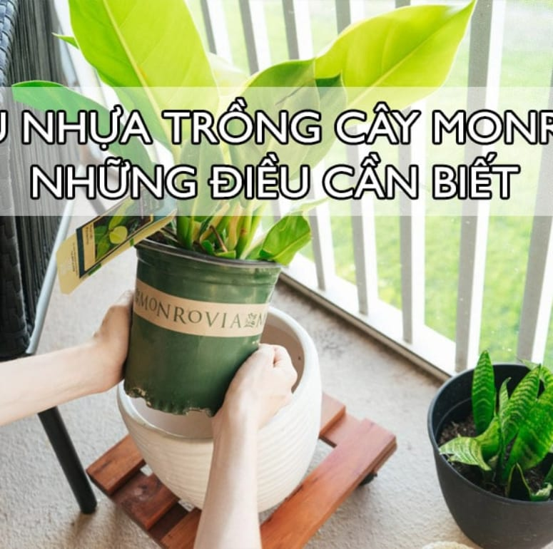 Tất tần tật thông tin bạn cần biết về chậu nhựa trồng cây Monrovia