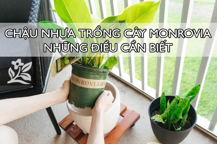 Chậu nhựa trồng cây