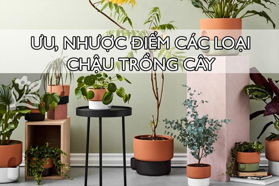 Chậu trồng cây