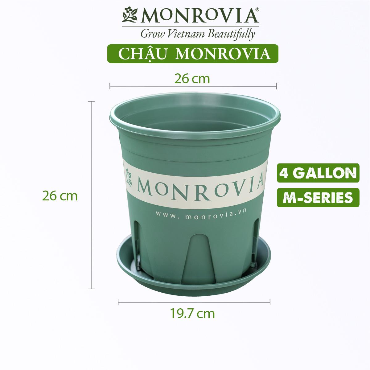 Chậu nhựa trồng cây Monrovia, chậu trồng cây, chậu cây cảnh mini, để bàn, treo ban công, treo tường, cao cấp, m-series