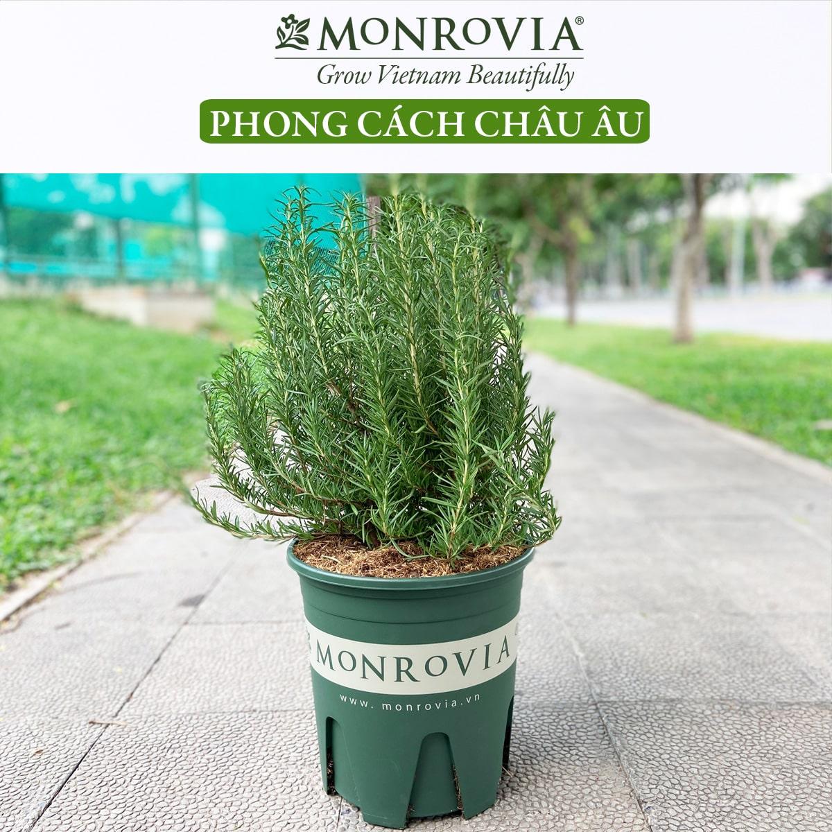 Chậu nhựa trồng cây Monrovia, chậu trồng cây, chậu cây cảnh mini, để bàn, treo ban công, treo tường, cao cấp, m-serries (15)-min