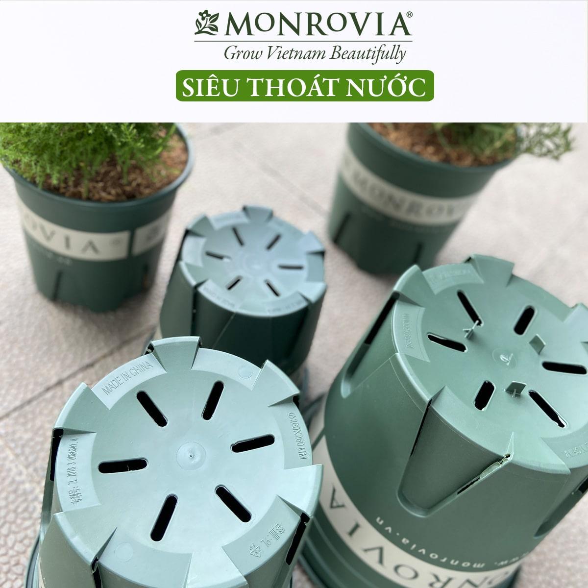 Chậu nhựa trồng cây Monrovia, chậu trồng cây, chậu cây cảnh mini, để bàn, treo ban công, treo tường, cao cấp, m-serries