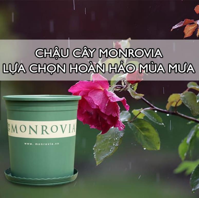 Chậu cây Monrovia – Lựa chọn hoàn hảo cho cây mùa mưa
