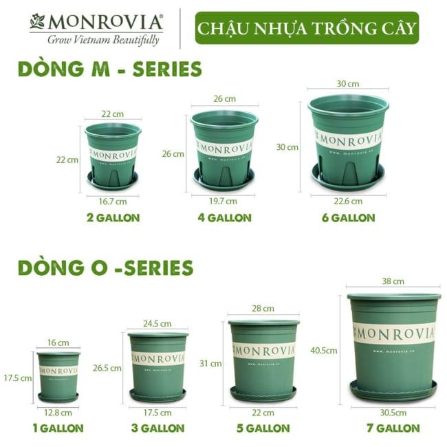 chau-nhua-monrovia