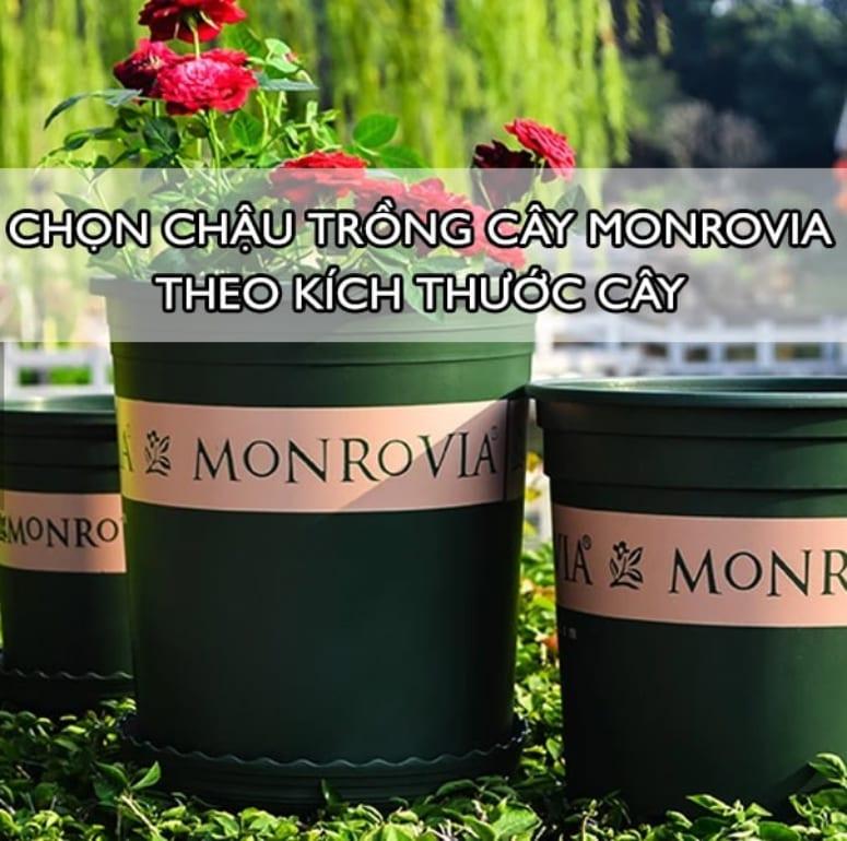 Chọn chậu trồng cây Monrovia theo kích thước cây