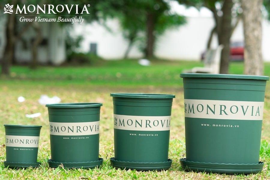 3-mau-chau-trong-cay-monrovia-doc-la