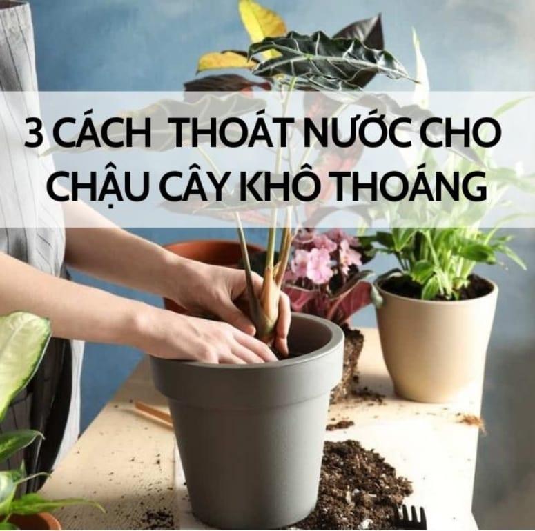 3 cách thoát nước cho chậu cây khô thoáng