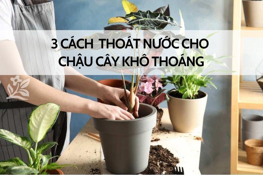 cach-thoat-nuoc-cho-chau-cay
