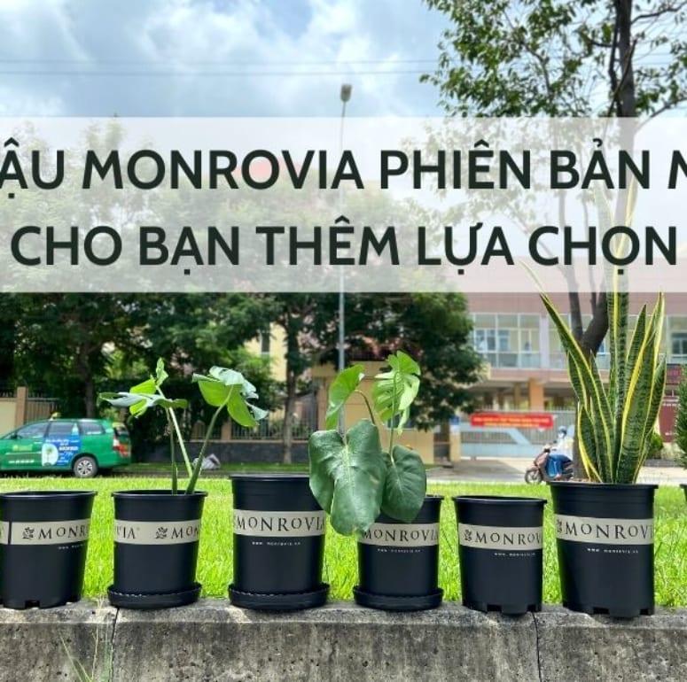 Chậu Monrovia phiên bản mới cho bạn thêm lựa chọn